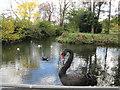 SU9298 : Duck pond at Little Missenden by Peter S
