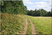 SE3058 : Permissive Path, Bilton Beck Wood by N Chadwick