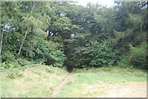 SE3058 : Bilton Beck Wood by N Chadwick