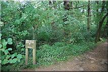 SE3158 : Bilton Beck Wood by N Chadwick