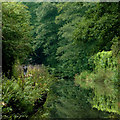 SJ9169 : Macclesfield Canal south of Oakgrove, Cheshire by Roger  Kidd