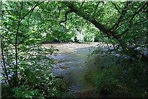 SE3158 : River Nidd in the Nidd Gorge by N Chadwick