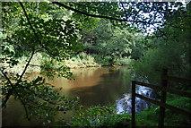 SE3258 : River Nidd in the Nidd Gorge by N Chadwick