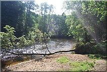 SE3258 : River Nidd, Nidd Gorge by N Chadwick