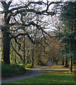 TQ3870 : Path, Beckenham Place Park : Week 50
