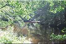 SE3358 : River Nidd, Nidd Gorge by N Chadwick