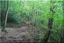 SE3358 : Footpath in the Nidd Gorge by N Chadwick