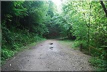 SE3358 : Track, Nidd Gorge by N Chadwick