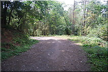 SE3357 : Bend, Forest track by N Chadwick