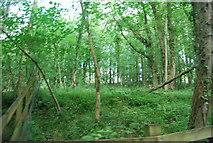 SE3357 : Woods, Nidd Gorge by N Chadwick