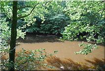 SE3357 : River Nidd by N Chadwick