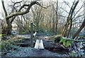 SK6151 : Oxton Bogs, Oxton, Notts. by David Hallam-Jones