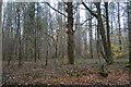 TQ2038 : Woodland by Partridge Lane by N Chadwick