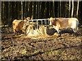 NZ0455 : Cattle feeder in Greymare Hill Plantation by Oliver Dixon