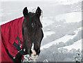 SJ9793 : Horse in red blanket : Week 4