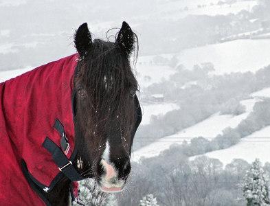 SJ9793 : Horse in red blanket by Stephen Burton