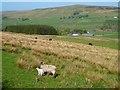 NY6948 : Pasture, Kirkhaugh by Andrew Smith