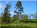 NY7546 : Pasture, Nenthall, Alston Moor by Andrew Smith