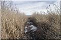NO2926 : Reedbed path by William Starkey