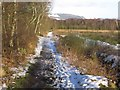 SJ9070 : View ENE along path across Danes Moss near Macclesfield by Colin Park
