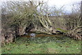 SJ4152 : Waterlogged corner of a field by Jeff Buck