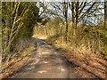 SJ8180 : Path towards Newgate by David Dixon