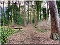 SJ8079 : Path in Hewitts Wood by David Dixon