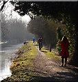 SU5666 : Canal towpath, Woolhampton, Berkshire : Week 10