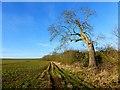 SP8122 : Farmland, Creslow by Andrew Smith