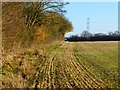 SP8209 : Farmland, Ellesborough by Andrew Smith