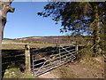 NJ5103 : Boggy field below Loch Coull House by Stanley Howe