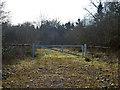 SU9690 : Track into Birchland Wood by Robin Webster