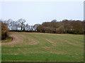 SU9197 : Field by Penfold Lane by Robin Webster