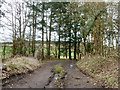 SP8404 : Access track, Blyth's Wood by Robin Webster