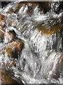 SE0500 : Water : Week 14