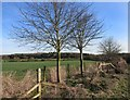 SP6213 : Trees and Fields near Honeyburge by Des Blenkinsopp