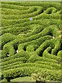 SW7727 : Detail of the maze at Glendurgan by Rod Allday