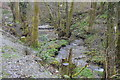 SX5160 : Tributary of the River Plym, Common Wood by N Chadwick