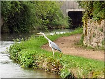 SJ9495 : Heron near the M67 by Gerald England