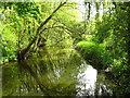 TM3154 : River Deben near Loudham Decoy Pond by Chris Holifield