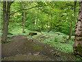 SE0226 : Hebden Royd FP38 in Brearley Wood by Humphrey Bolton