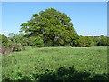 SU9072 : Fields near Braziers Lane by Alan Hunt