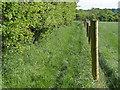 SU9072 : Footpath to Braziers Lane by Alan Hunt