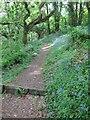 SW7526 : Footpath in National Trust Pengwedhen Wood by Dr Duncan Pepper