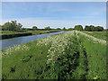 TL5268 : Fen Rivers Way by Hugh Venables