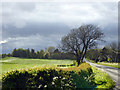 NY3168 : Pasture near Hill House : Week 21