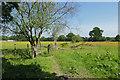 SU8366 : Fields near Redlake by Alan Hunt