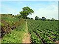 SJ5175 : Arable land near Frodsham by Jeff Buck