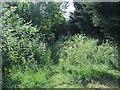 TL1868 : Overgrown footpath off Hardwick Lane by JThomas