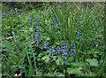 TL3557 : Bugle, Hardwick Wood by Hugh Venables